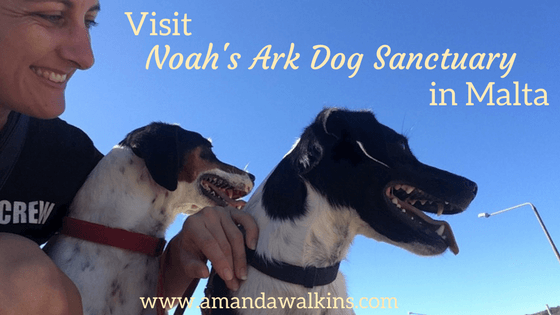 Noahs Ark Dog Sanctuary in Malta - volunteer to walk dogs