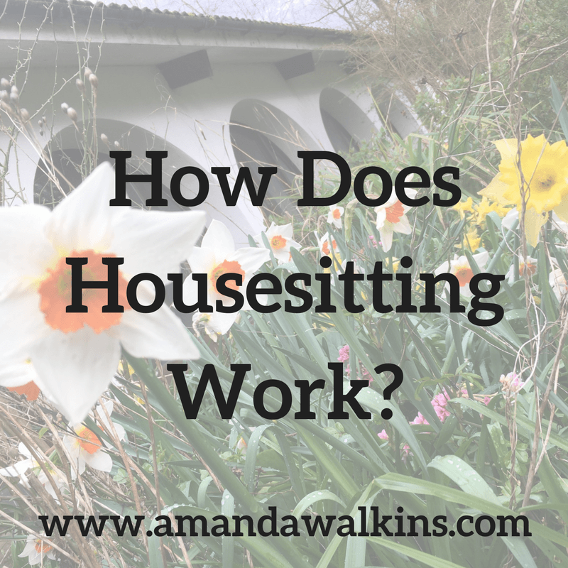 housesitting tips and insights