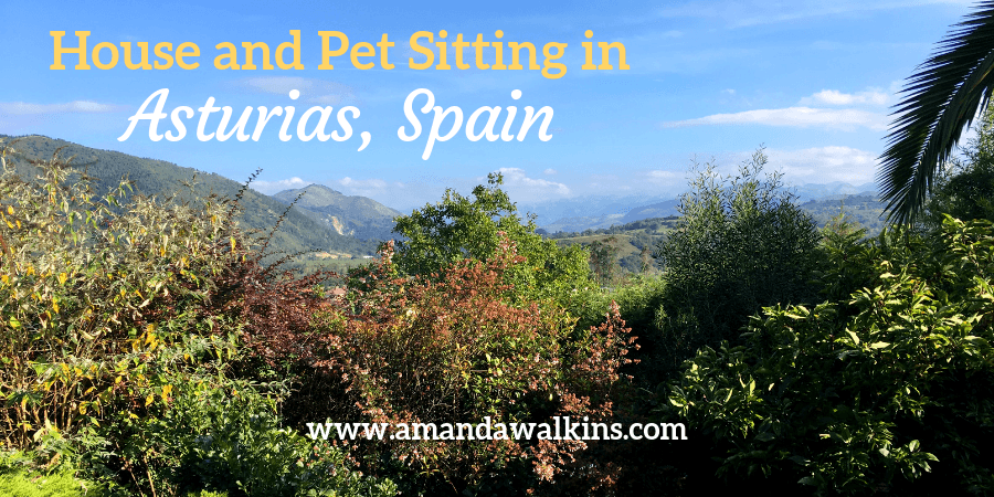 Mountains and trees of Asturias Spain. All about house and pet sitting in Asturias Spain from expat writer Amanda Walkins